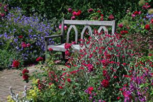 Картинка Великобритания Сады Розы Кустов Скамейка Garden Rosemoor Природа