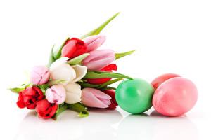 Картинки Пасха Тюльпан Букет Яйцо Белый фон Цветы
