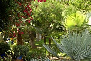 Фотография Марокко Сады Деревья Пальм Jardin Majorelle Marrakech Природа
