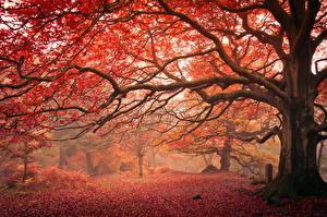 Обои Осень Ветки Деревья Ствол дерева Природа фото