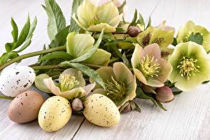 Фотография Морозник Пасха Яйцами Цветы