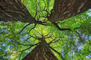 Обои Ствол дерева Деревья Ветки Вид снизу Природа фото