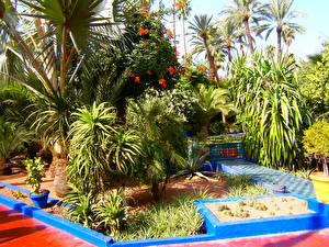 Фото Марокко Сады Кустов Пальма Jardin Majorelle Marrakech Природа