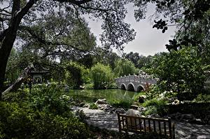 Фотография Штаты Сады Пруд Мост Калифорнии Деревья Кустов Скамья Huntington Botanical Gardens and Museum San Marino Природа