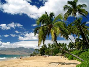 Фотографии Америка Тропики Побережье Гавайи Пальма Облачно Maui Природа