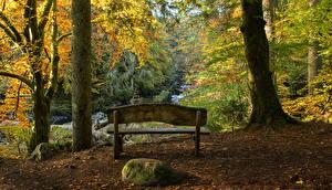 Фотография Шотландия Парки Осенние Камень Деревьев Скамейка Ствол дерева Hermitage Природа