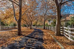 Картинки Осень Деревья Ограда Тротуар Природа