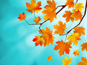 Картинки Осень Листва Клён Ветвь