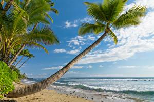 Обои Тропики Побережье Небо Волны Пейзаж Океан Гавайи Пальмы Деревья Природа фото