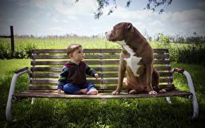 Фотографии Собака Скамья Мальчишка ребёнок Животные