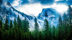 Обои США Горы Калифорния Деревья Йосемити Невада Sierra Природа фото
