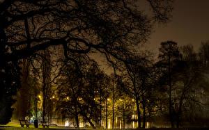 Фото Бельгия Парки Дерева Ночь Brussels Природа
