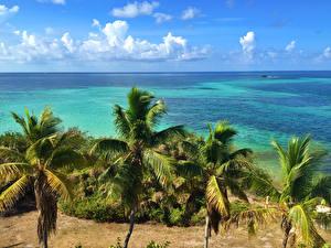 Обои США Побережье Небо Пальмы Florida Природа фото