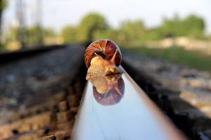 Фотографии Улитки Железные дороги Крупным планом Рельсы животное