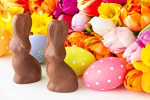 Фото Пасха Тюльпаны Кролик Шоколад Яиц Цветы