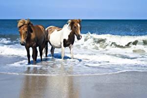 Фотография Лошади Побережье Волны Вдвоем животное