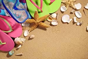 Обои Ракушки Морские звезды Песок фото