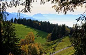 Фото Австрия Пейзаж Леса Луга Lochau Природа