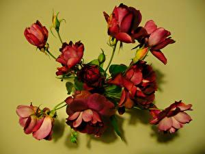 Обои Розы Бордовый Бутон Цветы фото
