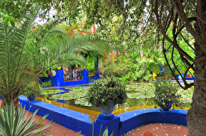 Фото Марокко Сады Пруд Кустов Пальм Marrakech  Jardin Majorelle Природа