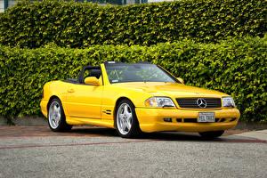 Картинки Мерседес бенц Желтый Кабриолет Металлик 1998-2001 SL 500 US-spec (R129) машины