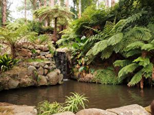 Картинка Австралия Сады Водопады Пруд Камни Пальмы Alfred Nicholas Memorial Gardens Sherbrooke Природа