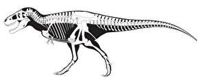 Картинка Динозавры Тираннозавр рекс Скелет