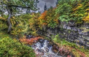 Фотографии Шотландия Водопады Осень Деревья HDRI Clyde Valley Woodlands Природа