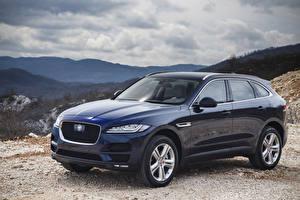 Обои Jaguar Синие Металлик 2016 Jaguar F-Pace Portfolio Автомобили