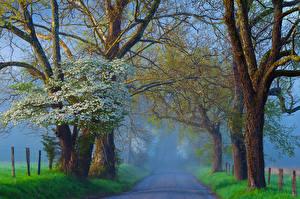 Картинки Дороги Дерева Туман Природа