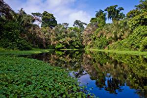 Картинки Тропики Озеро Jungle Природа