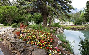 Фото Канада Парки Сады Пруд Деревьев Скамья Cascade Gardens Природа