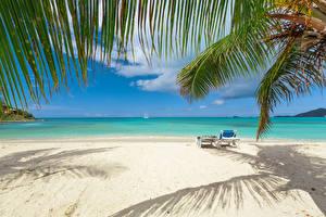 Обои Тропики Побережье Ветки Пляж Природа фото
