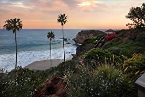 Обои США Побережье Пальмы Кусты Laguna Beach Природа фото