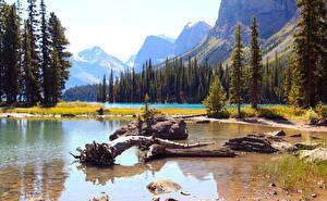 Фото Канада Парки Озеро Пейзаж Ель Джаспер парк Maligne Природа