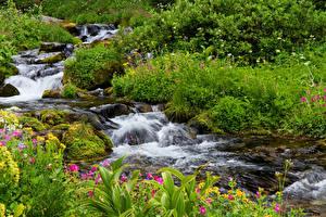 Картинка США Парки Водопады Ручеек Маунт-Рейнир парк