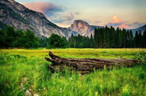 Обои США Парки Горы Леса Пейзаж Йосемити Трава Природа фото