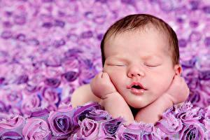 Фото Грудной ребёнок Спит Лицо Дети