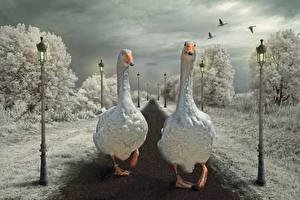 Картинки Гуси Уличные фонари Две Животные