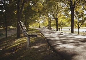 Картинки Парки Скамейка Тротуар Деревья Природа