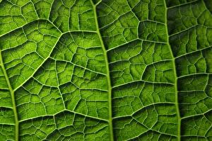 Обои Текстура Крупным планом Макросъёмка Лист Зеленых Природа
