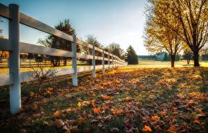 Обои Осень Забор Деревья Трава Природа фото