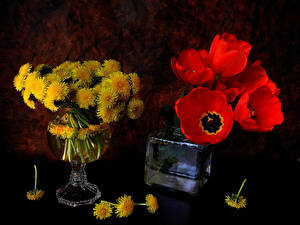 Обои Одуванчики Тюльпаны Натюрморт Цветы фото
