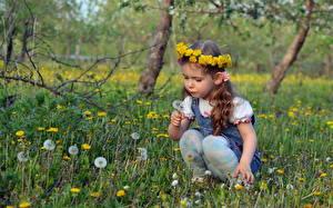 Обои Одуванчики Трава Девочки Дети фото