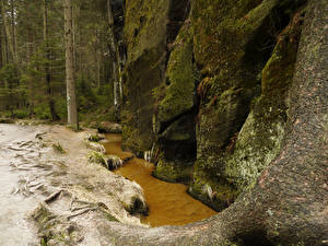 Обои Чехия Парк Скала Ручеек Мха Dolni Adrspach Природа