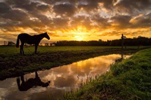 Фото Пейзаж Рассветы и закаты Луга Речка Лошади Небо Природа Животные