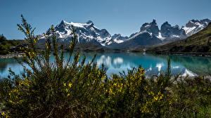 Фотография Чили Горы Озеро Кусты Природа