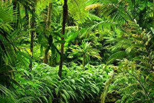 Картинка Тропики Леса Jungle