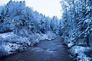 Обои Реки Леса Зима Деревья Негр Природа фото