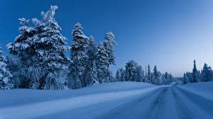 Фотографии Финляндия Зима Дороги Снег Деревья Природа